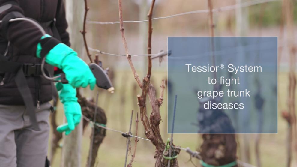 Tessior System - direkte Spritzapplikation auf Weihnranken